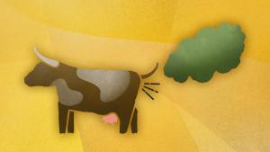 methane-cow-fart