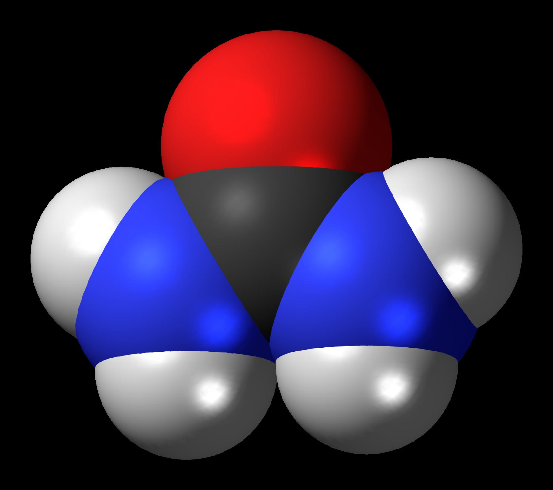 Molecule Advent Day 12: Urea