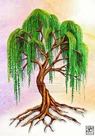 willow-tree